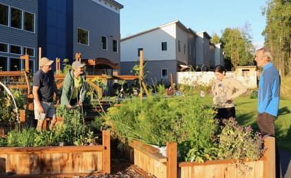 Numerous garden boxes warm soil, decrease bending over