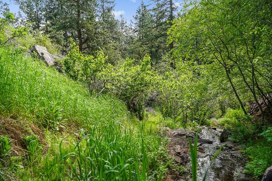 Sky Meadow Ln, Golden, CO 80401, US Photo 23